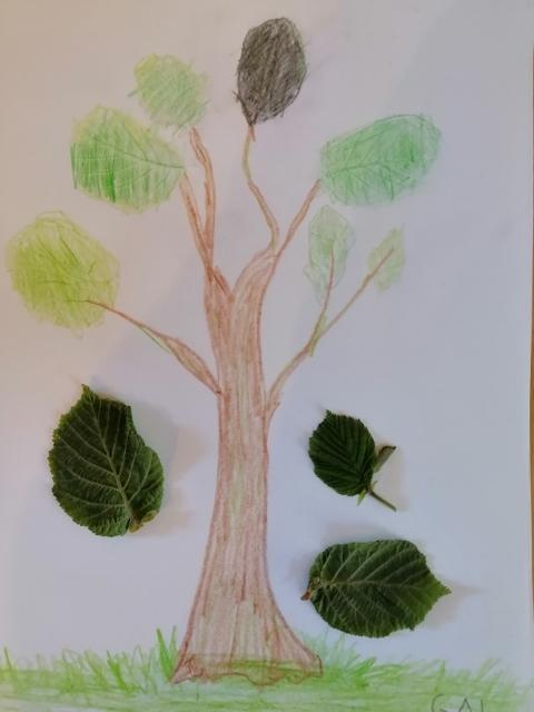 Gal drevo (480x640)